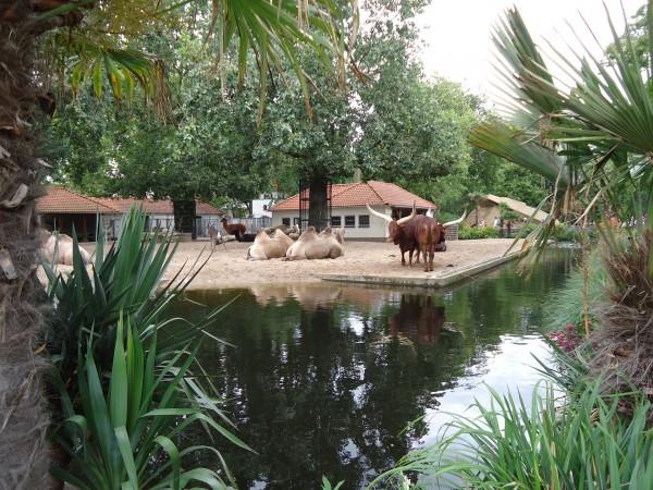 Вальеры Амстердамского зоопарка Artis