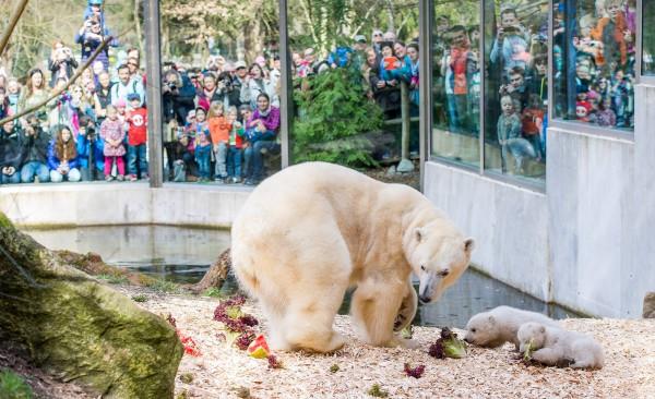 Удобные Вальеры Мюнхенского зоопарка Хеллабрунн