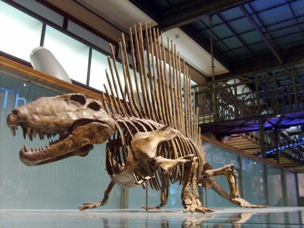 Скелет динозавра национальном музее естествознания в Мадриде